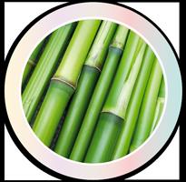 Estratto di Bamboo